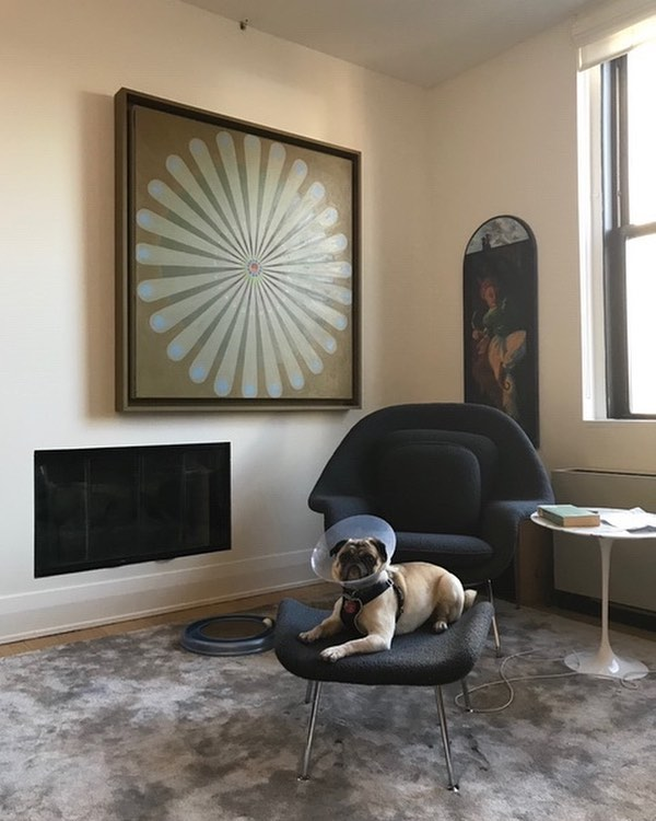 When a project impresses not only your client, but their pet as well. Product: Lexington tencel carpeting by @empirecollectionrugs, Design by @santiagotomasinteriors.